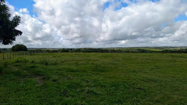 Fazenda em Monte Alegre - Com 80,52 Ha -Com Açude - Foto 3