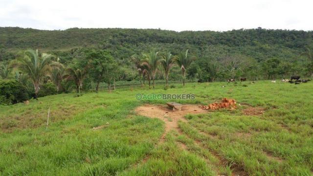 Sítio 19,5 ha em serra de são vicente - Foto 7
