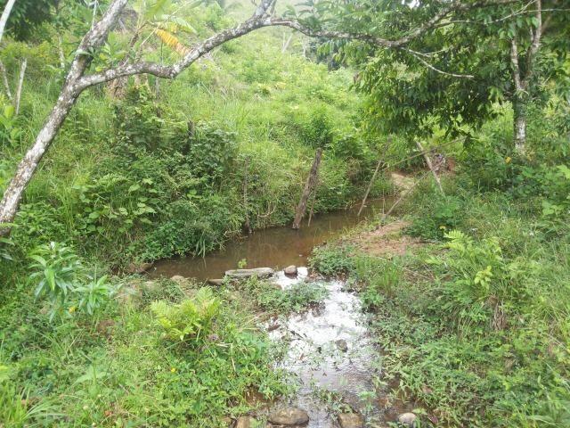 Propriedade rural com 140 HEC - Foto 8
