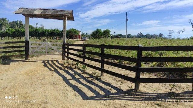 Vende-se Fazenda à 49 km de Porto Velho área com 115 hectares  - Foto 8
