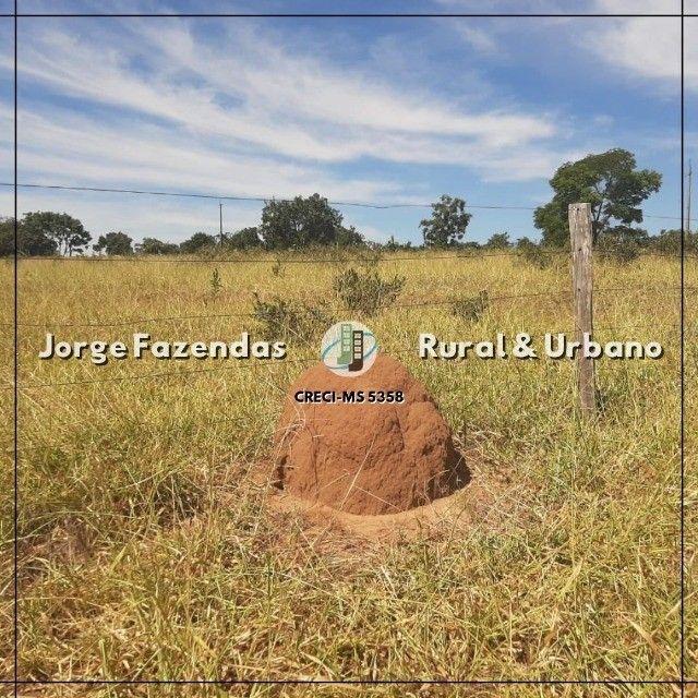 Fazenda 1.497 Hectáres Camapuã Ms Fácil Acesso Ótima para pecuária  - Foto 2
