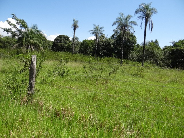 Fazenda de Pecuária 917 hectares - Foto 20