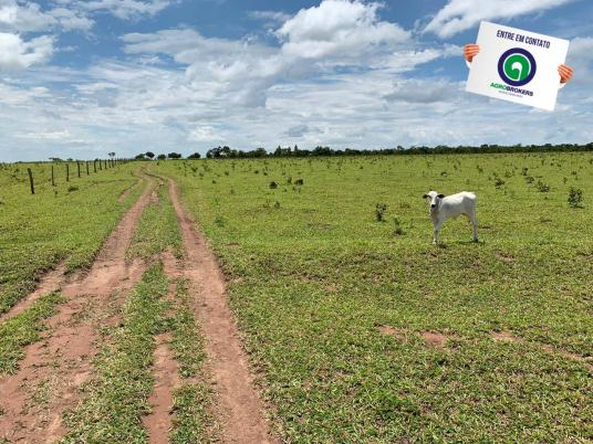 Fazenda 100 ha região de bom jardim - Foto 9
