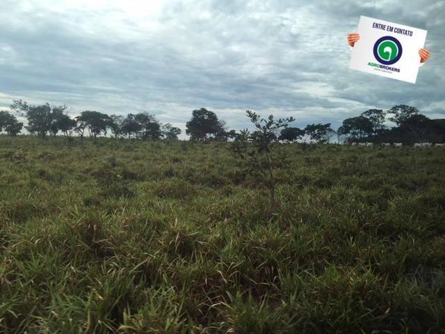 Fazenda 1600 ha no manso - Foto 4