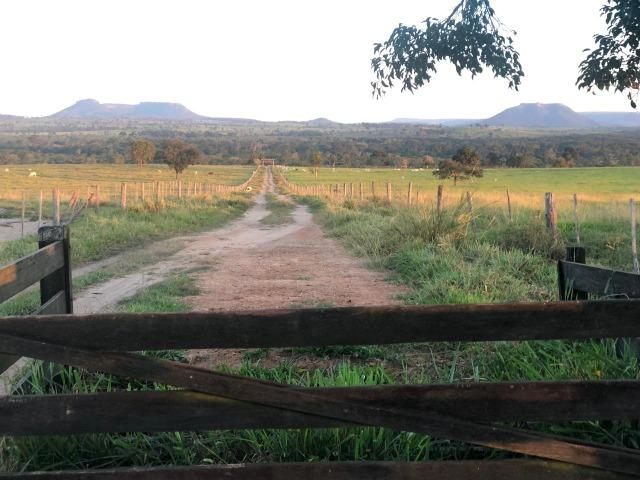 Nova Taquari MT Fazenda a 60 km da cidade com 2.480 hectares em pasto - Foto 2