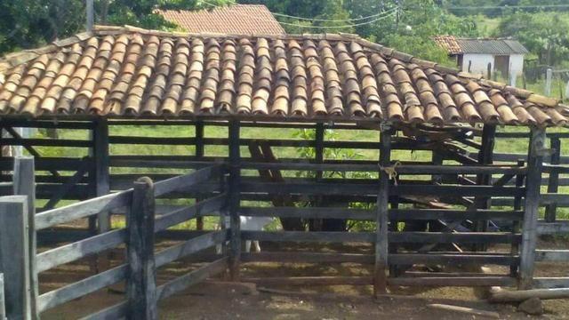 Fazenda Ribeirão - Foto 6