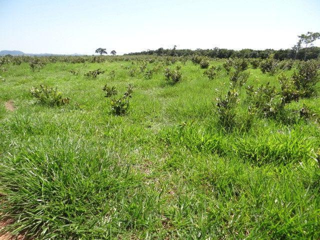 Fazenda de Pecuária 917 hectares - Foto 12