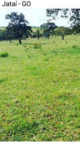 Fazenda Lavoura   Jatai-GO   37.5 Alqueires   Oportunidade  - Foto 2