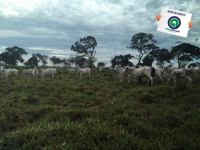 Fazenda 1600 ha no manso - Foto 2