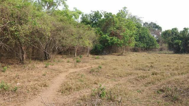 Fazenda com 13 Alq. em Palmeiras de Goiás - Foto 8