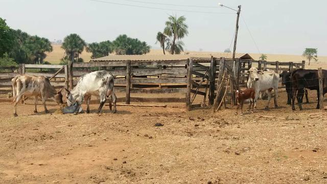 Fazenda com 13 Alq. em Palmeiras de Goiás - Foto 5