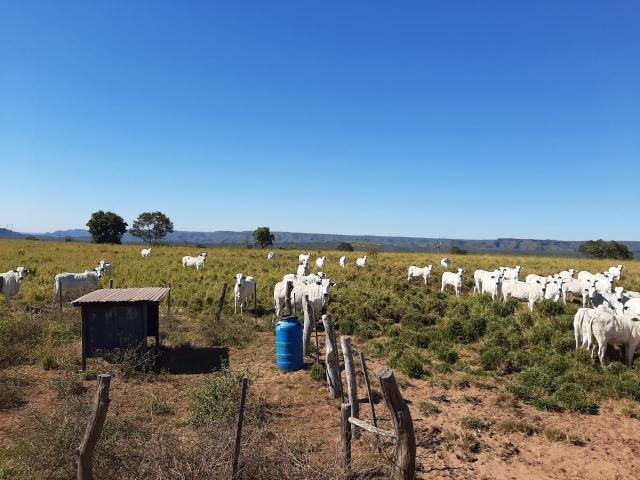 Fazenda Guiratinga MT 6.080 Ha - Foto 8