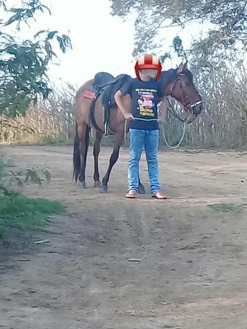 Piquira de picado - Foto 3