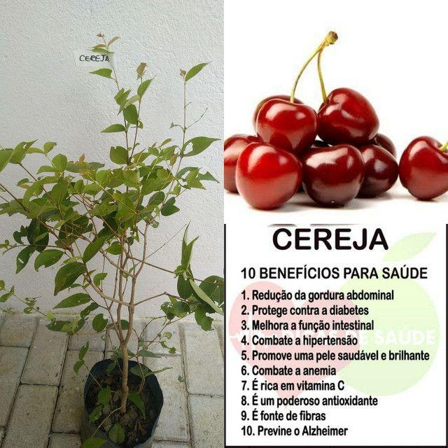 muda de cereja importada