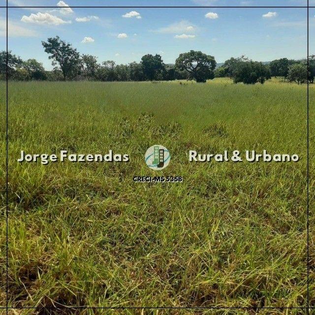 Fazenda 1.497 Hectáres Camapuã Ms Fácil Acesso Ótima para pecuária  - Foto 3
