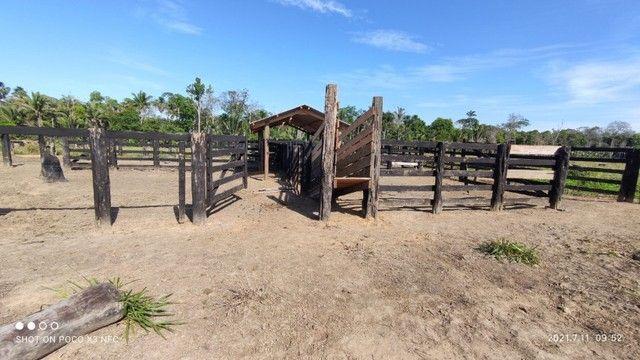 Vende-se Fazenda à 49 km de Porto Velho área com 115 hectares  - Foto 13