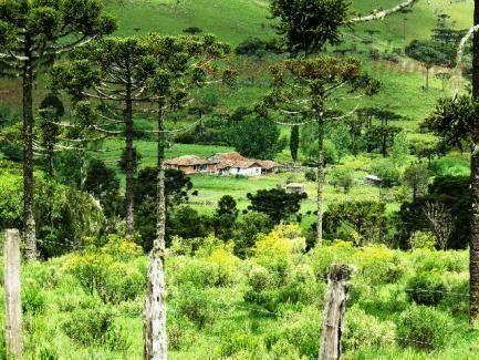 Fazenda em Urubici - Foto 3