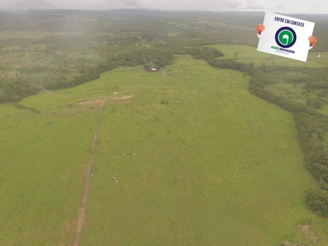Fazenda 700 ha região do manso - Foto 14