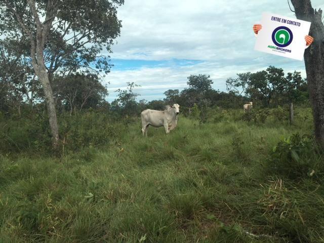 Fazenda 1600 ha no manso - Foto 6