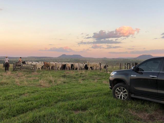 Nova Taquari MT Fazenda a 60 km da cidade com 2.480 hectares em pasto - Foto 10