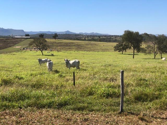 Nova Taquari MT Fazenda a 60 km da cidade com 2.480 hectares em pasto - Foto 3