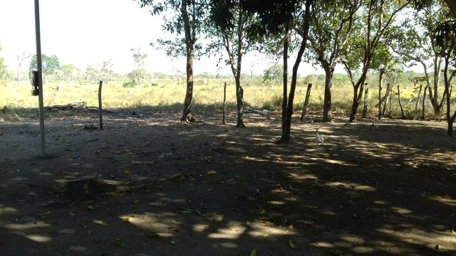 Vendo uma terra pertinho do arraia 13 alqueiro - Foto 4