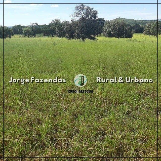 Fazenda 1.497 Hectáres Camapuã Ms Fácil Acesso Ótima para pecuária  - Foto 5