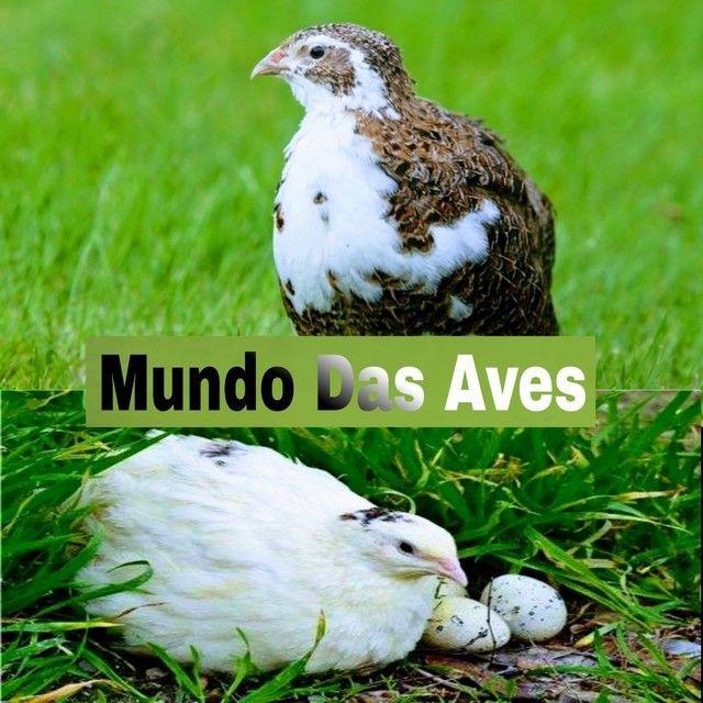 Mundo Das Aves - Foto 4