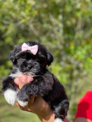 Venha conhecer seu bebê Lhasa Apso Entrega Imediata Pedigree - Foto 4