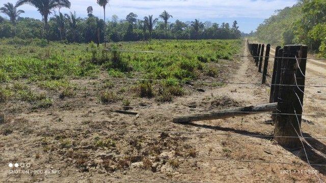 Vende-se Fazenda à 49 km de Porto Velho área com 115 hectares  - Foto 5
