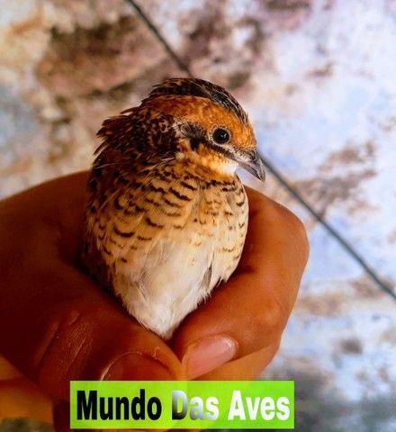 Mundo Das Aves - Foto 3