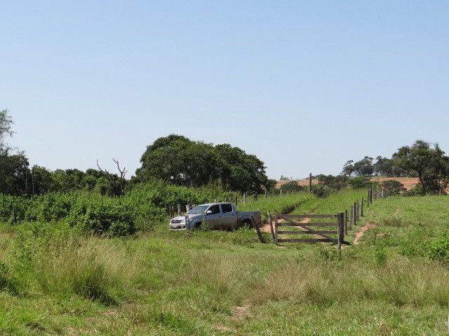 Fazenda de Pecuária 917 hectares - Foto 10