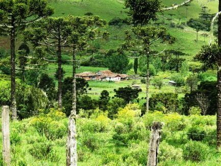 Fazenda em Urubici - Foto 13