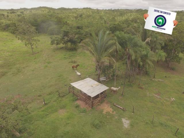 Fazenda 700 ha região do manso - Foto 4