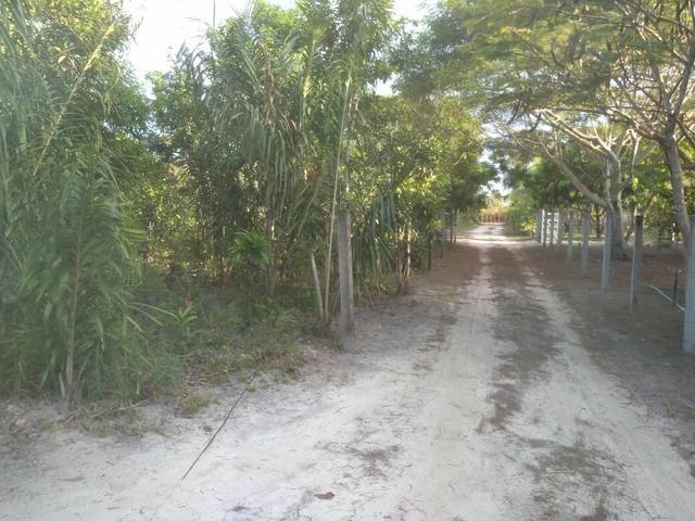 Terreno no Distrito de Curralinho, próximo a Sauípe - Foto 4