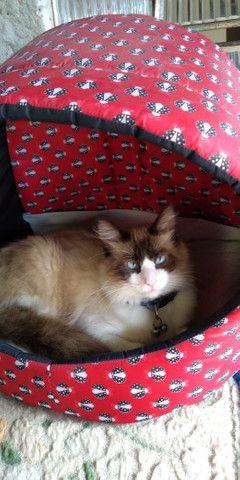Doa-se gato macho - Foto 2