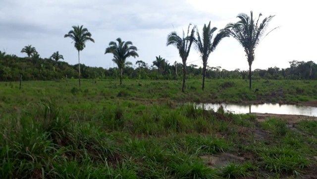 Vende-se Fazenda à 49 km de Porto Velho área com 115 hectares  - Foto 3