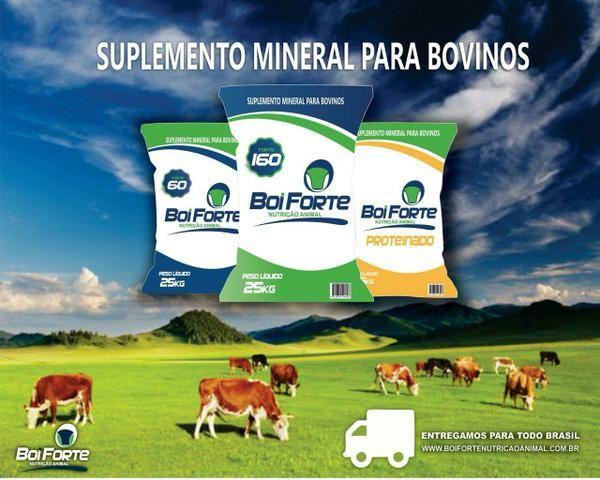 Suplemento mineral pra bovinos