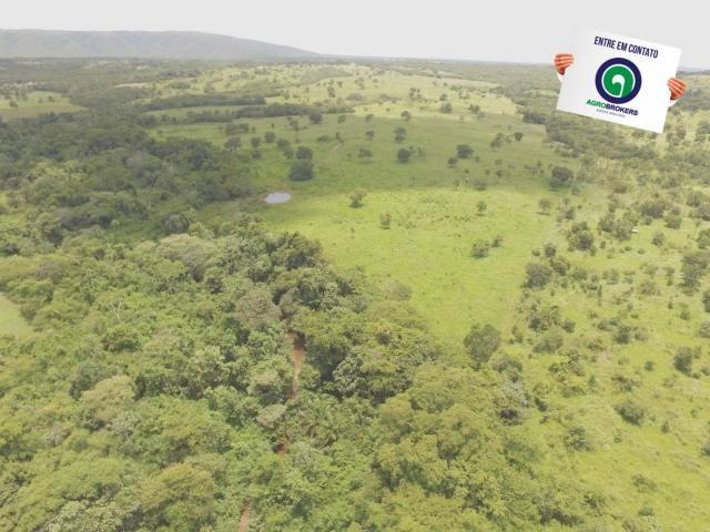 Fazenda 162 ha região de acorizal - mt - Foto 8