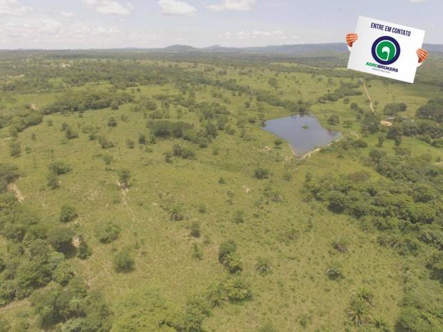 Fazenda 162 ha região de acorizal - mt - Foto 7