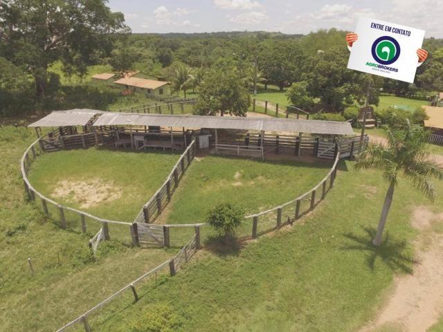 Fazenda 162 ha região de acorizal - mt - Foto 4