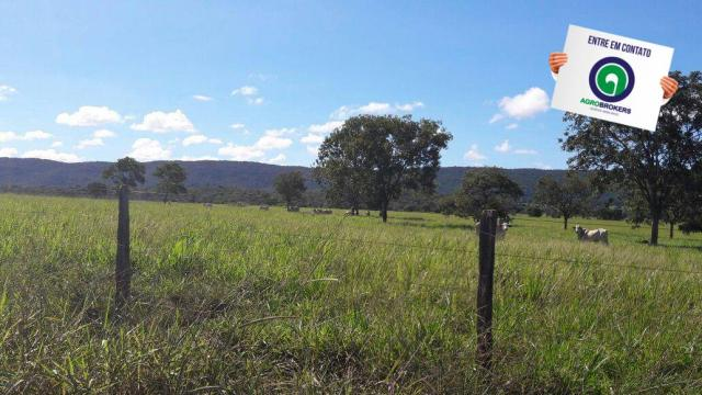 Fazenda 1.650 ha sentido caceres - Foto 8