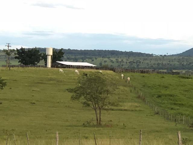 Nova Taquari MT Fazenda a 60 km da cidade com 2.480 hectares em pasto - Foto 6