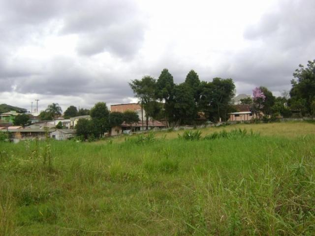 Terreno para alugar em Butiatuvinha, Curitiba cod:01618.001