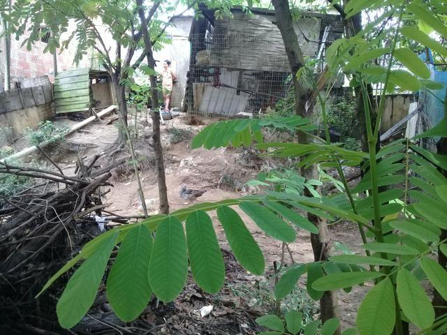 Terreno no viver melhor 1etp r$25,000,00 - Foto 3