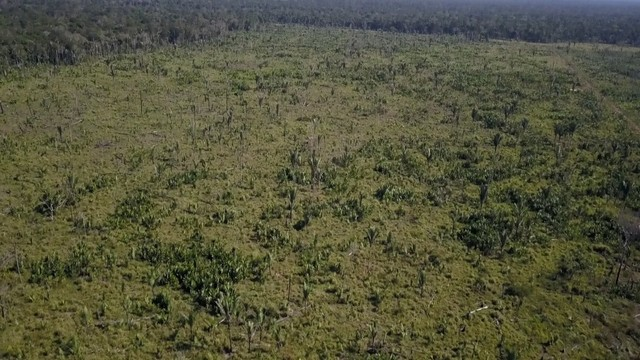 Vende-se Fazenda à 49 km de Porto Velho área com 115 hectares  - Foto 12