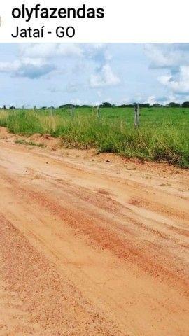 Fazenda Lavoura   Jatai-GO   37.5 Alqueires   Oportunidade  - Foto 4