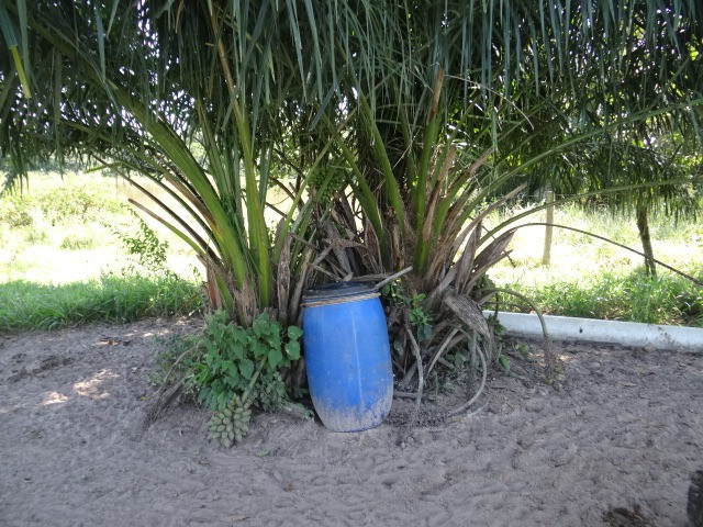 Fazenda de Pecuária 917 hectares - Foto 18