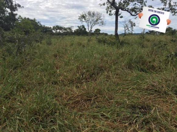 Fazenda 1600 ha no manso - Foto 8