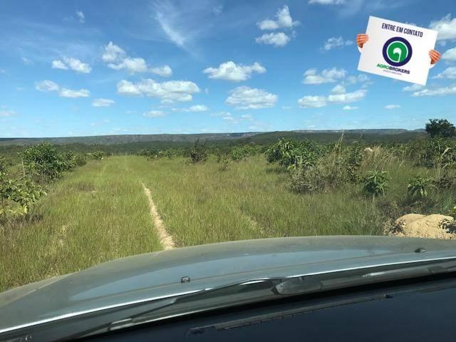Fazenda 1000 ha no manso - Foto 7